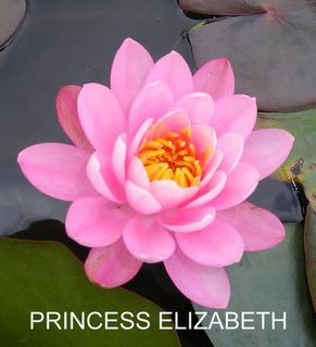 Princess_Elizabeth